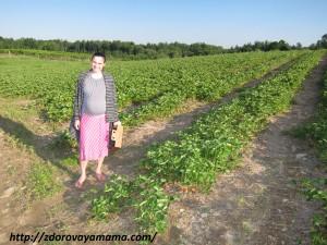 Ферма в Америке