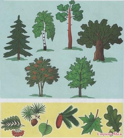 учим деревья